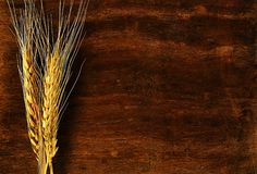Ear of barley on wood background Royalty Free Stock Images