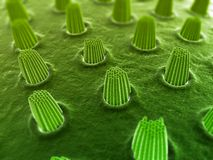 Ear cells Stock Photography