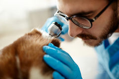Ear check-up Stock Photography