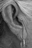 Ear closeup Royalty Free Stock Image