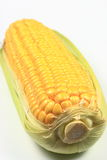 Ear of corn Stock Image