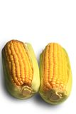 Ear of corn Stock Photography