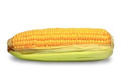 Ear of corn stock photography