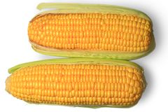 Ear of corn. An ear of corn on the white background Stock Image