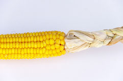 Ear of corn. An ear of corn, with the husks still on Royalty Free Stock Photo