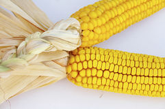 Ear of corn. An ear of corn, with the husks still on Stock Photography