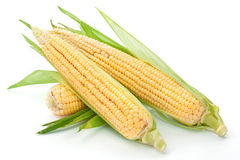 Ear of Corn. Corn on a white background Royalty Free Stock Image