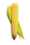 Ear of Corn Stock Photos