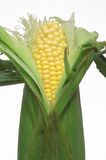 Ear of Corn Royalty Free Stock Images