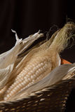 Ear of corn in a basket Stock Images