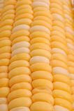 Ear of Corn Closeup. Closeup of an ear of corn Stock Photo
