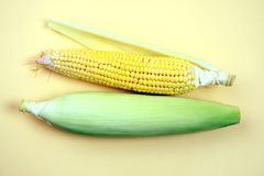 Ear of corn, closeup with space for copy. Corn is an agricultural product, can used for various eatables. like popcorn and many more testy food items stock photos