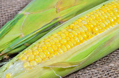 An ear of corn Royalty Free Stock Photo
