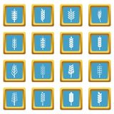 Ear corn icons azure Stock Images