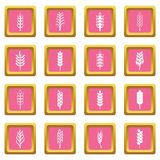 Ear corn icons pink Royalty Free Stock Photography