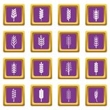Ear corn icons set purple Royalty Free Stock Photos