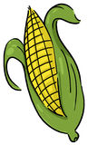 Ear of corn illustration. Corn illustration; Ear of corn  drawing; Isolated corn on the cob Stock Photography