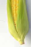 An ear of corn isolated Royalty Free Stock Image