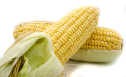 Ear of Corn isolated Stock Image