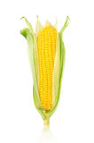 Ear of Corn isolated on a white background Royalty Free Stock Photography