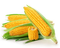 An ear of corn Stock Photos