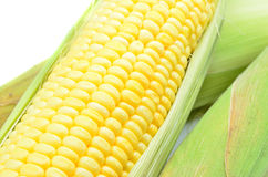 An ear of corn Stock Images