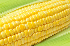 An ear of corn Stock Photography