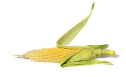 Ear of corn. Isolated on a white background royalty free stock photography