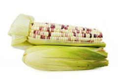 Ear of Corn isolated Royalty Free Stock Photo