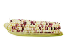 Ear of Corn isolated Stock Images