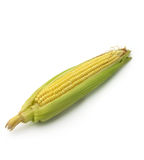 Ear of corn isolated Royalty Free Stock Photography
