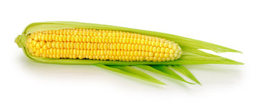 An ear of corn isolated on the white background Stock Image