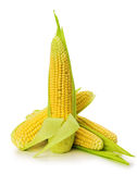 An ear of corn isolated on the white background Royalty Free Stock Photography