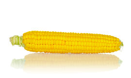 An ear of corn Royalty Free Stock Images