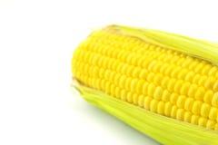 An ear of corn Stock Image