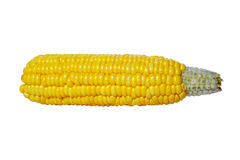 Ear of corn isolated on white background. Stock Images