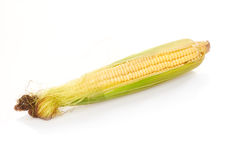 Ear of corn isolated on white Stock Photography