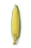 Ear of corn isolated Royalty Free Stock Image