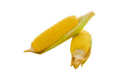 An ear of corn isolated on a white background Stock Images
