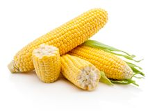 Ear of corn isolated on white background. Ear of corn isolated on a white background stock photography