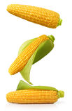 Ear of corn isolated on a white background stock photo
