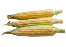 An ear of corn isolated on a white background. Royalty Free Stock Photography
