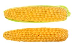 Ear of corn isolated on a white background. Top view.  stock image