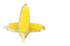 Ear of Corn isolated on a white background Stock Image