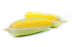 An ear of corn isolated on a white background Stock Photos