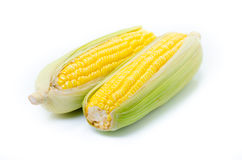 An ear of corn isolated on a white background Stock Image
