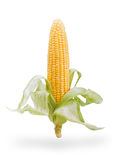 Ear of corn isolated on white Royalty Free Stock Photography