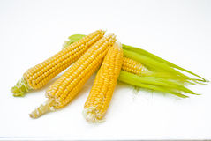 Ear of Corn with Leaves Stock Photography