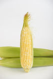 Ear of corn. Leaves are removed. You can see the grain Royalty Free Stock Images