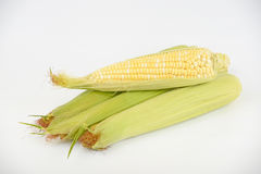 Ear of corn. Leaves are removed. You can see the grain Royalty Free Stock Photo